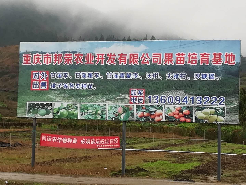 重庆风水大师高浦洪为农业产业化项目